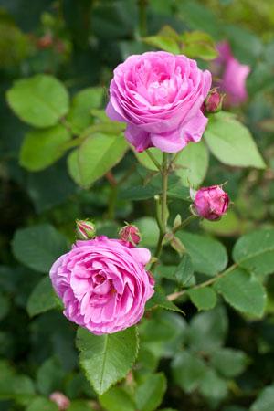 скачать Rosa торрент - фото 9
